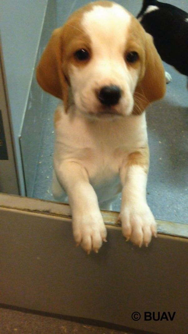 Oliver in the laboratory BUAV