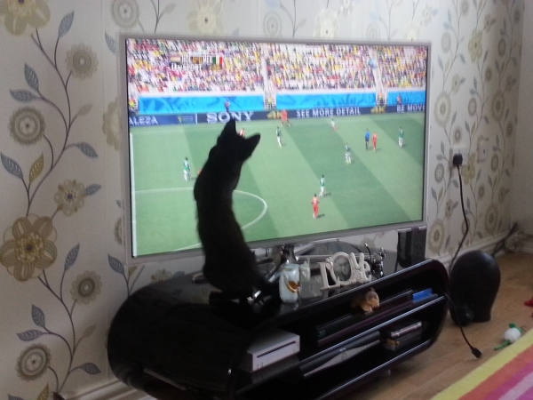 Blue Cross Find Football Loving Kitten Lionel A New Home In Time For The World Cup 2014 Final