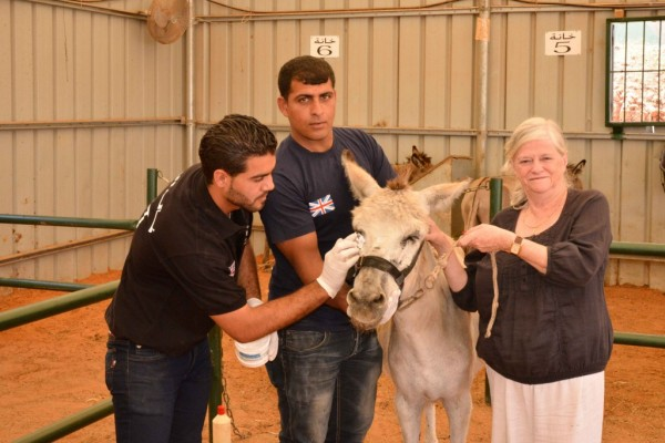 Safe For Life: Ann Widdecombe Visits Donkey Charity