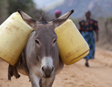 Incredible To See How Donkeys Help Keep People Alive