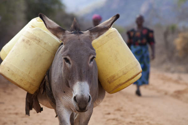 Donkeys Saving Lives