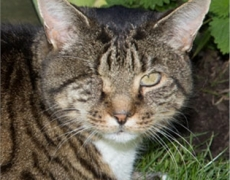 One-Eyed Former Stray Wins Cat Of The Year Award