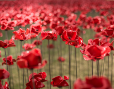 A Volunteer's Experience As A Tower of London Poppy Planter
