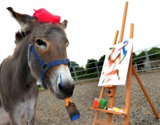 Patty the Painting Donkey: Our Amazing Animal of the Month