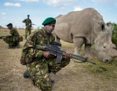 Astonishing Facts About Rhinos – Our Modern Day Dinosaurs