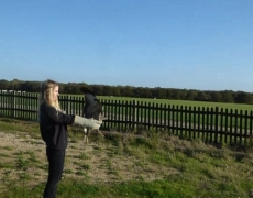That Magical Moment When You Go Home: Charity Rescues Buzzard