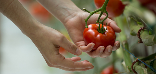 How Rooftop Farming is Changing How We Eat