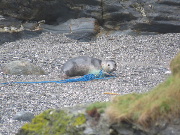 Seals Given a Second Chance at Life