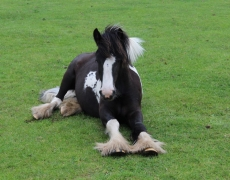 Gorgeous Foal Frodo Defies the Odds After Almost Freezing to Death