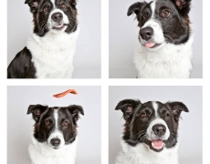 Photos Show Off Dogs' Personality