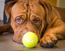 Does Your Dog Enjoy Playing with Balls? You Better Make Sure This Doesn't Happen