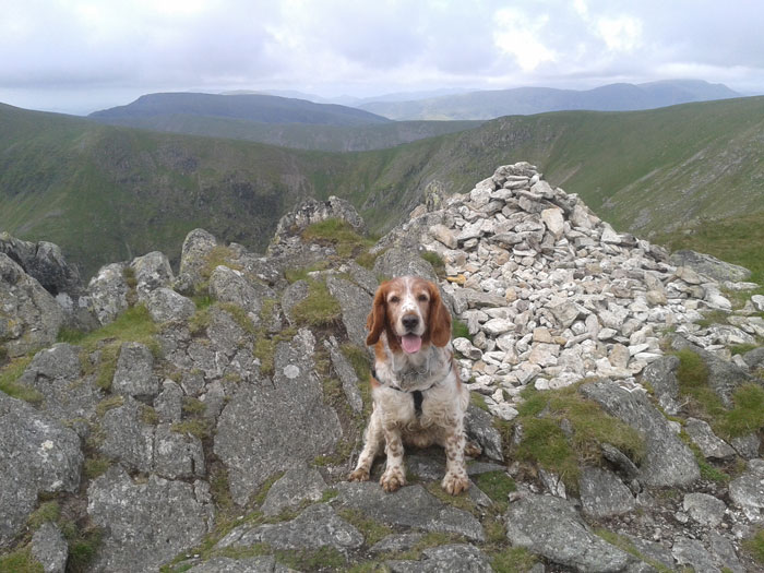 Fergus the Fundraising Dog Walks Almost 200 Miles for Charity