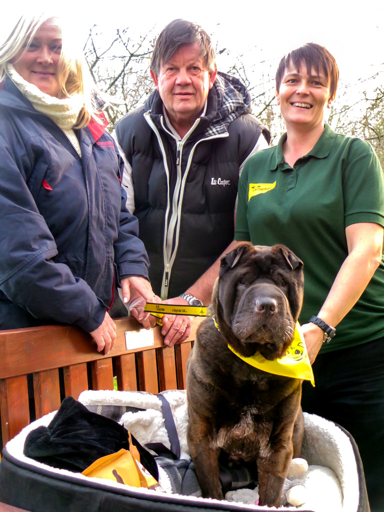 Homeless Dog and Dog Loving Couple Rewarded for their Patience