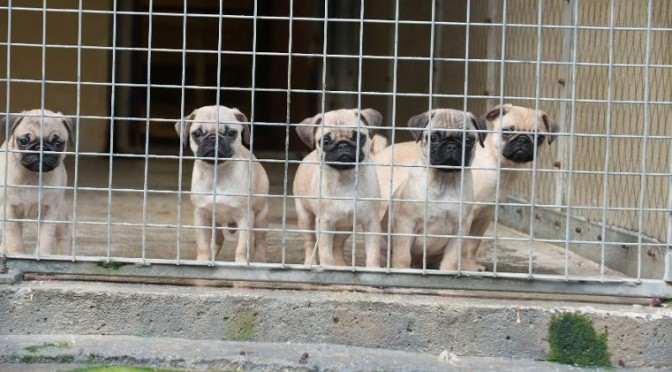 Smuggled puppies finally experience freedom