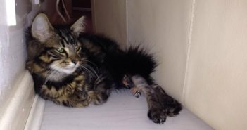 Kitten Found in Bin Rehomed in France After Long Distance Love Affair