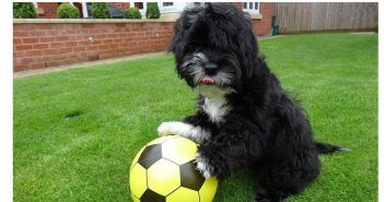 Meet Ronaldog, a Naturally Talented Footballer with a Difference