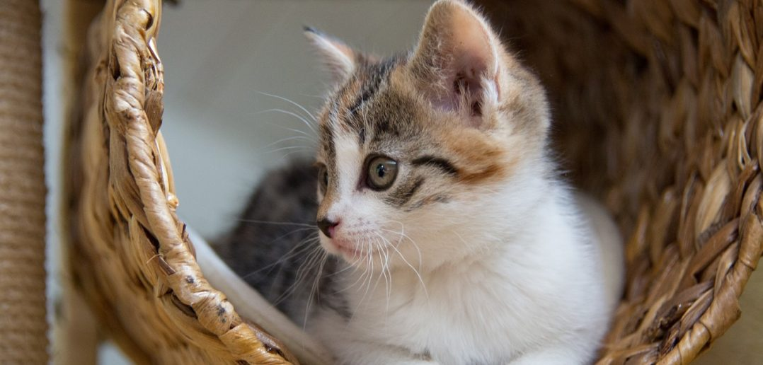 9 Questions to Help You Decide What Type of Cat You Should Adopt