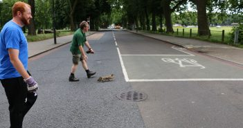 Why did the duck cross the road?