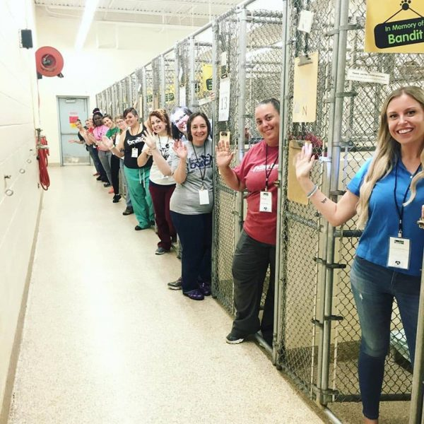 Drive to #cleartheshelters is a massive success!