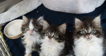 Abandoned kittens find a fruitful recovery thanks to The Mayhew Animal Home