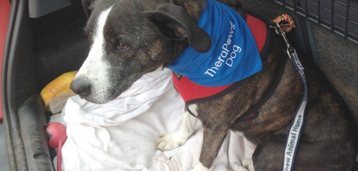 Loveable TheraPaws Dog Retires After Years of Helping Older People