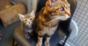 Rescue Mum Cat Takes in Teeny Orphaned Kitten