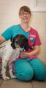 Dog with Crippling Arthritis Able to Walk Again