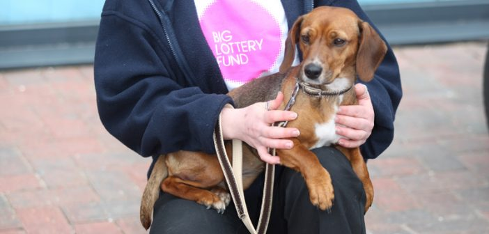 Brainy Dogs Become National Lottery Legends