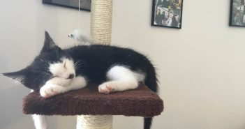 Lucky Black and White Kitten Gets A Happy Ending