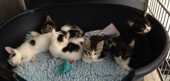 Olympic Kittens Get Happy Ending Following a Tough Start