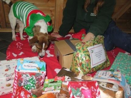 Animal Charity Shoebox Appeal Brings Christmas Cheer to All, Including the Chickens!