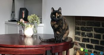 Elderly Cat Finds Purrrfect Home After a Long 21 Month Wait