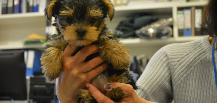 Blind puppy escapes death sentence for a second chance at Battersea
