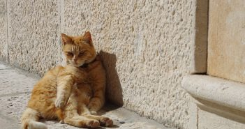 Protect Your Cat in the Warmer Weather - They Can Get Skin Cancer Too