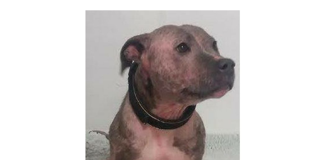 Happy Ending For Dog With Skin So Neglected She Looked Like a Pig