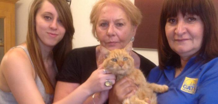 Owners Reunited With Three Cats Missing for a Total of 21 Years