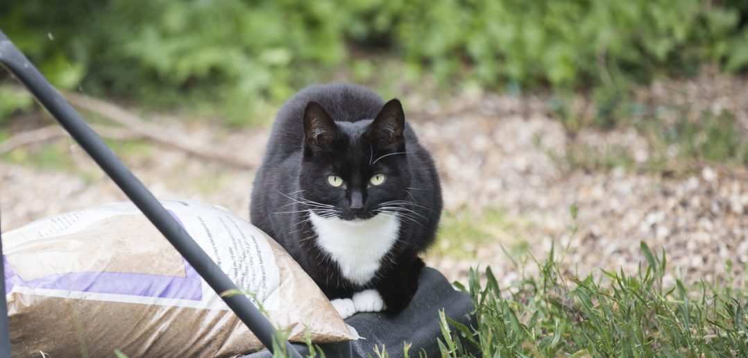 Black and White Cat Rewarded for Incredible Support She Gave Young Owner with Bone Cancer
