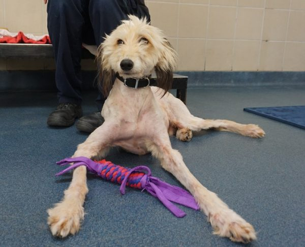 Public Help Lead a Terrified, Abandoned Dog to His Perfect Home