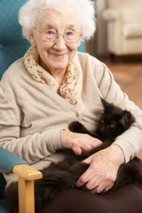 Cat Café Brings Christmas Cheer to Local Elderly Residents