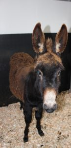 Roma the Donkey Rescued from Treacherous Bog