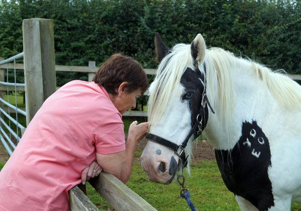 Rescue Horse in Emotional Reunion with Original Rescuer After 14 Years