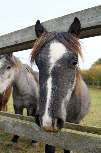 Charities Work Together During Horse Crisis to Help Those in Most Need