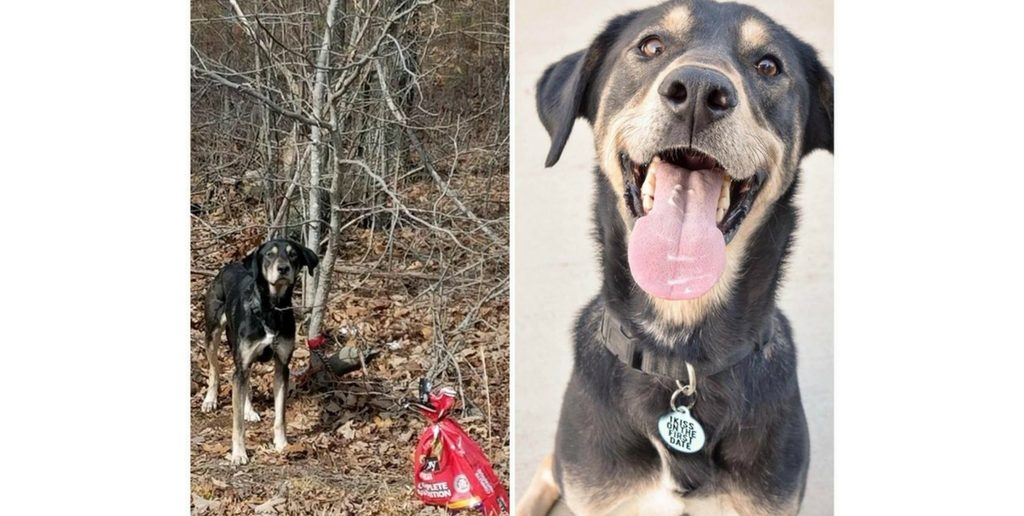 Dog Left Tied to Tree Finds Loving New Home