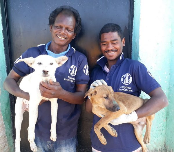 70,000th Stray Dog Neutered in Ranchi, India