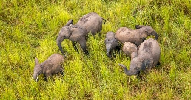 Dogs to Help Prevent Wildlife Crime at Garamba National Park, in Democratic Republic of Congo