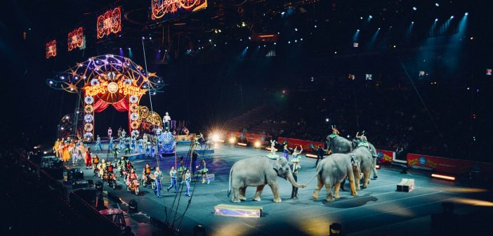 Animal Rights Groups to Provide Retired Circus Elephants with the Life They Deserve