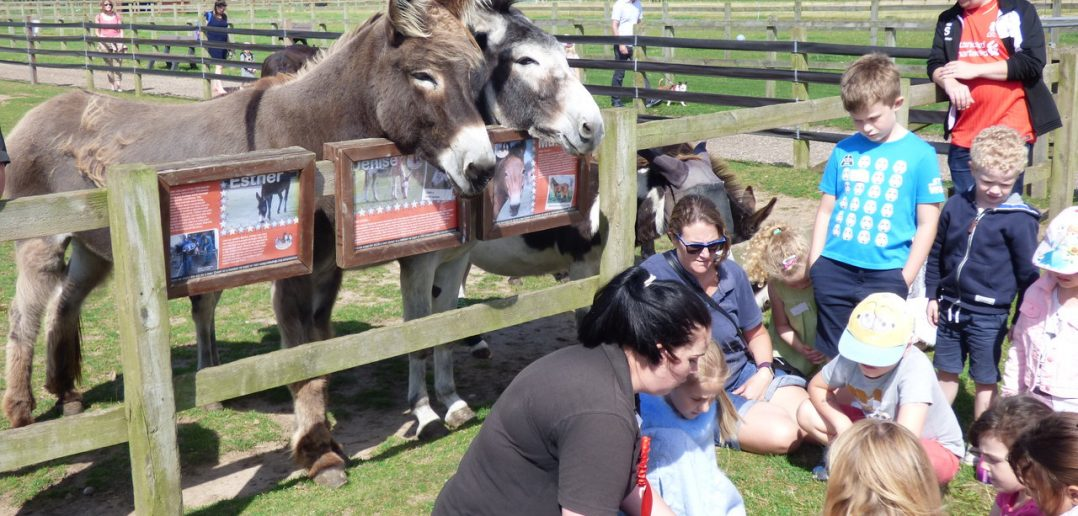 Fun, Free Summer Fun for Aspiring Young Horse Carers of the Future
