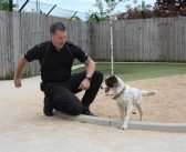 Dogs Trust resident sniffs out new career and new home