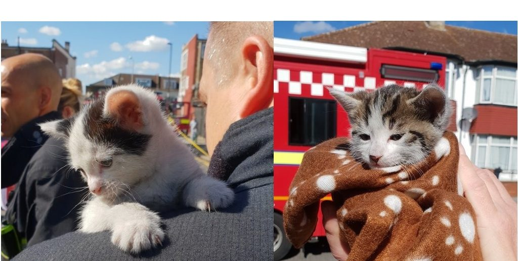 Cat-astrophe averted as firefighters rescue kittens from house fire in Thornton Heath
