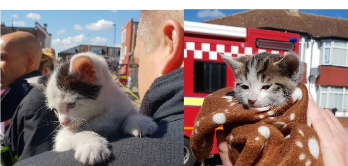 Cat-astrophe Averted as Firefighters Rescue Kittens From House Fire